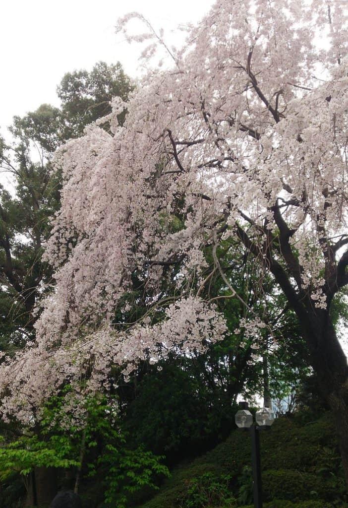 プリンスホテル桜
