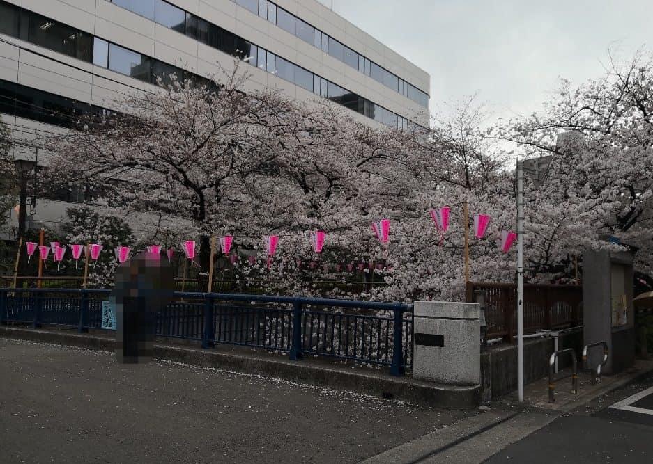 目黒川桜246南2