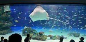 サンシャイン水族館 ガラガラ3
