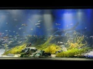 サンシャイン水族館 ガラガラ