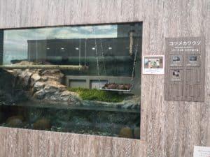 サンシャイン水族館 コロナでガラガラ カワウソ